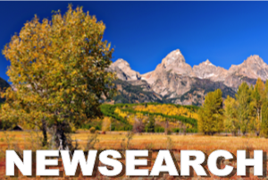 newsearch